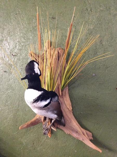 NELSON - Birds