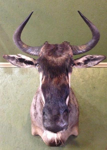 HENDRICKS-WILDEBEEST - Exotic/ African Shld Mounts
