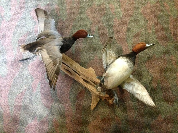 STUPKA - Birds