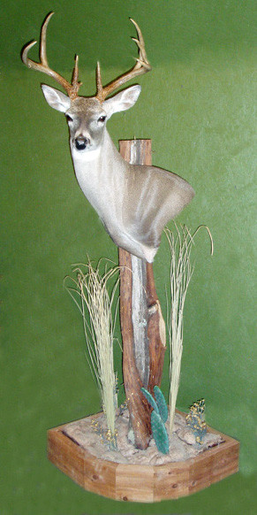 WAYNE RUTLEDGE - Shoulder Mounts