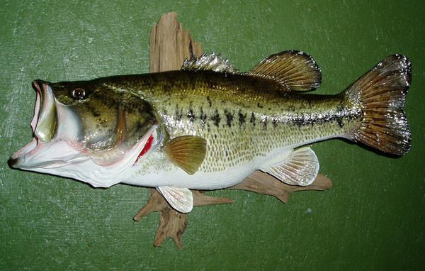 FITZGERALD - Fish