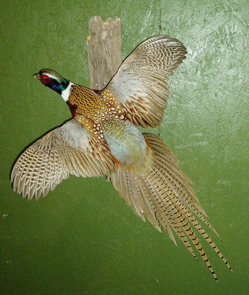 DEAN - Birds