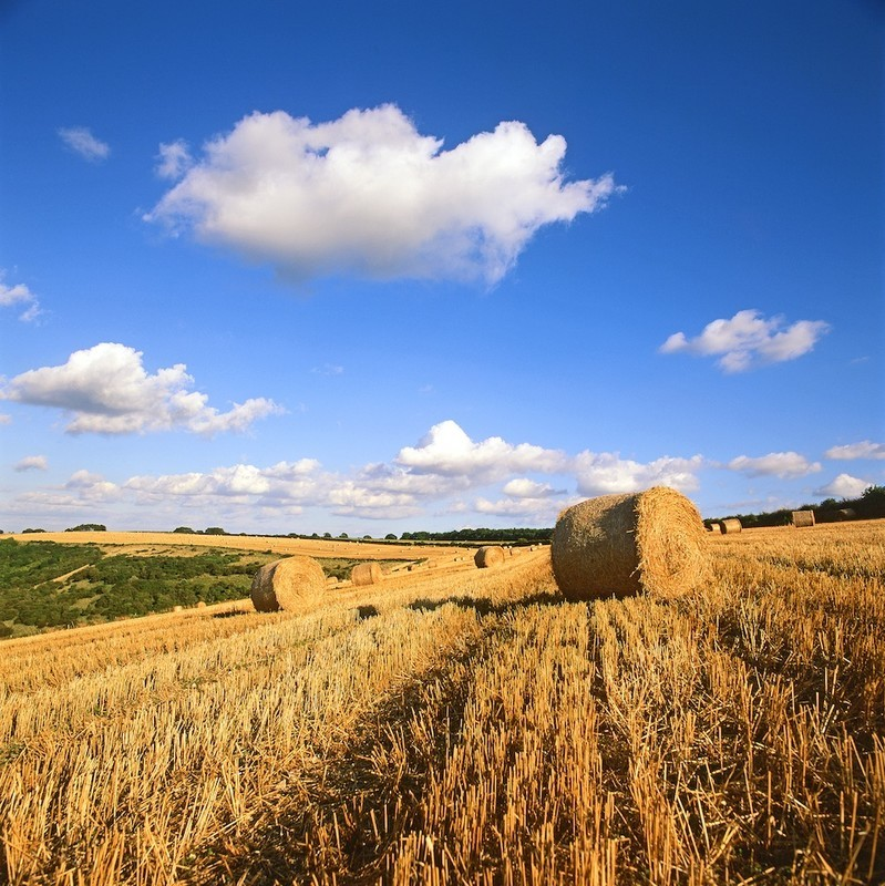Late Summer, Compton Abbas, Dorset Downs EDC144 - England