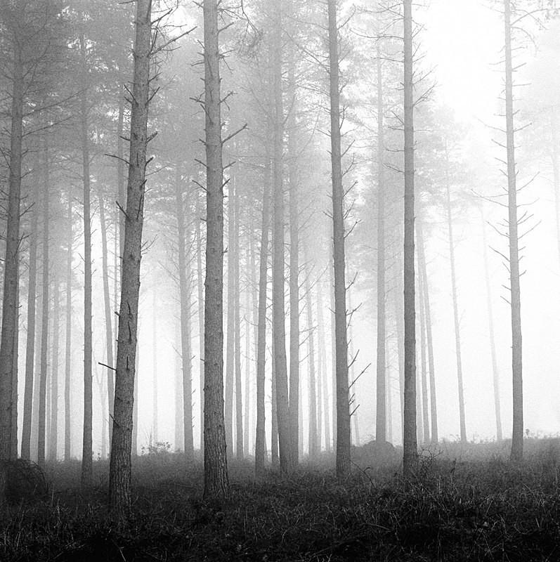 Misty Pines EDC080 - England