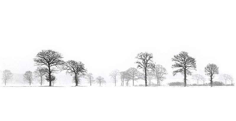 Winter Wood EDC032 - England