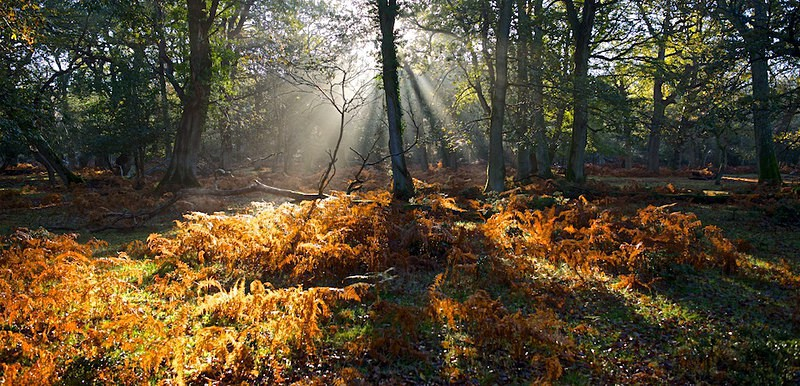 A Magical Dawn, New Forest