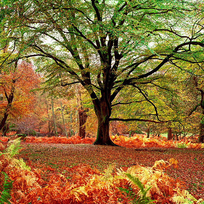 Autumn, New Forest