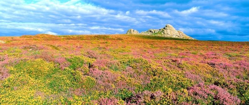 Hay Tor, Dartmoor, Devon EDC021 - England