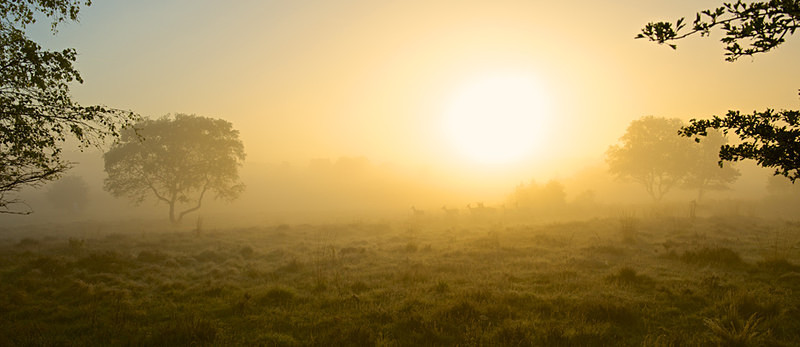 Summer Dawn,Dunwich Heath,Suffolk Coast EDC184 - England