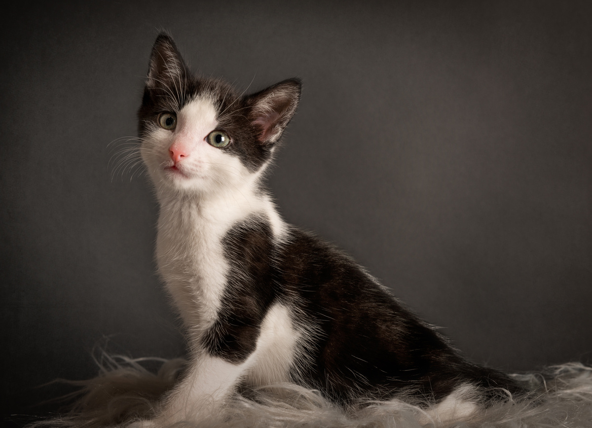 Kyza - Studio Pet Portraits