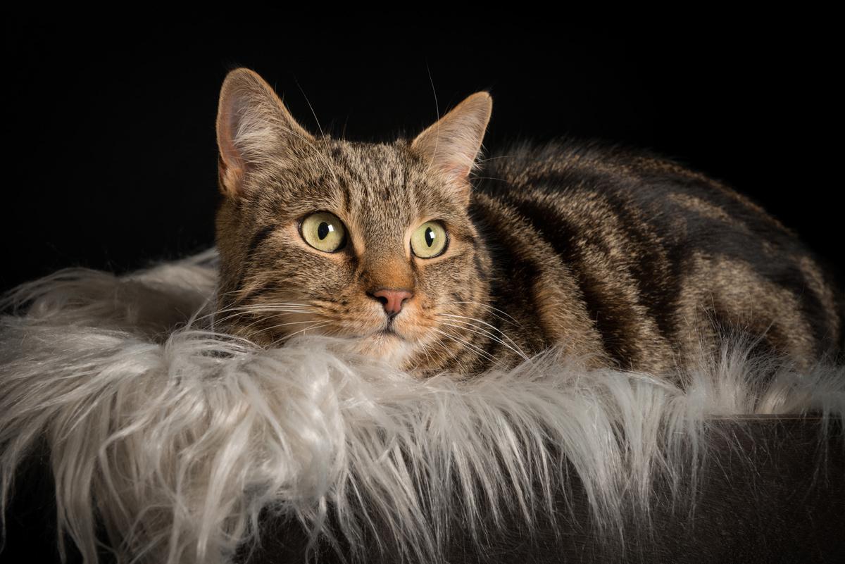 Rio - Studio Pet Portraits