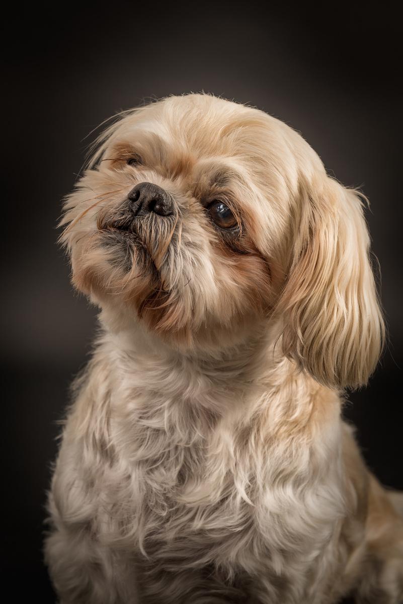 Molly - Studio Pet Portraits