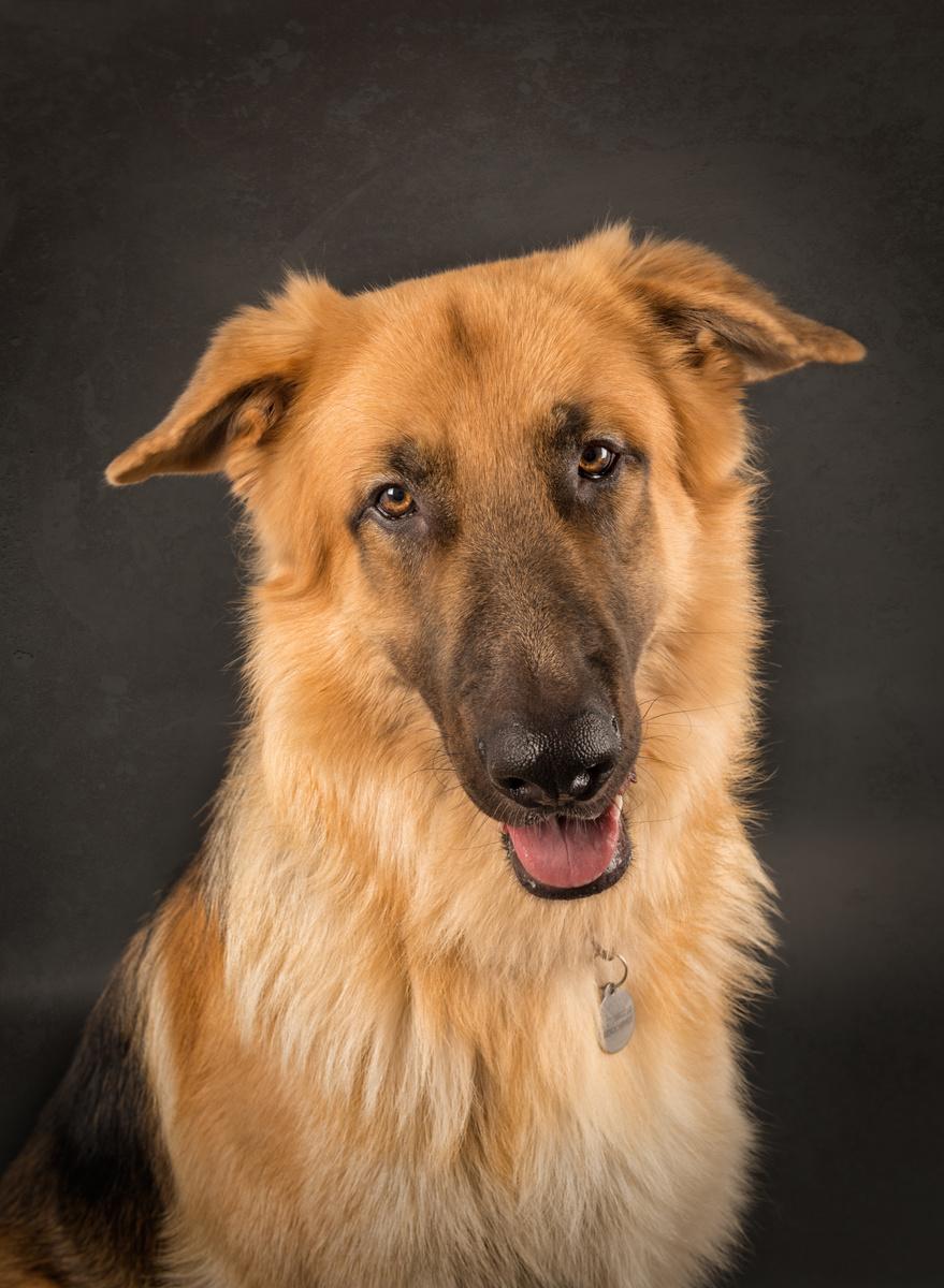 Kaiser - Studio Pet Portraits