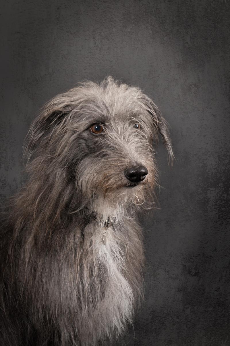 Alfie - Studio Pet Portraits