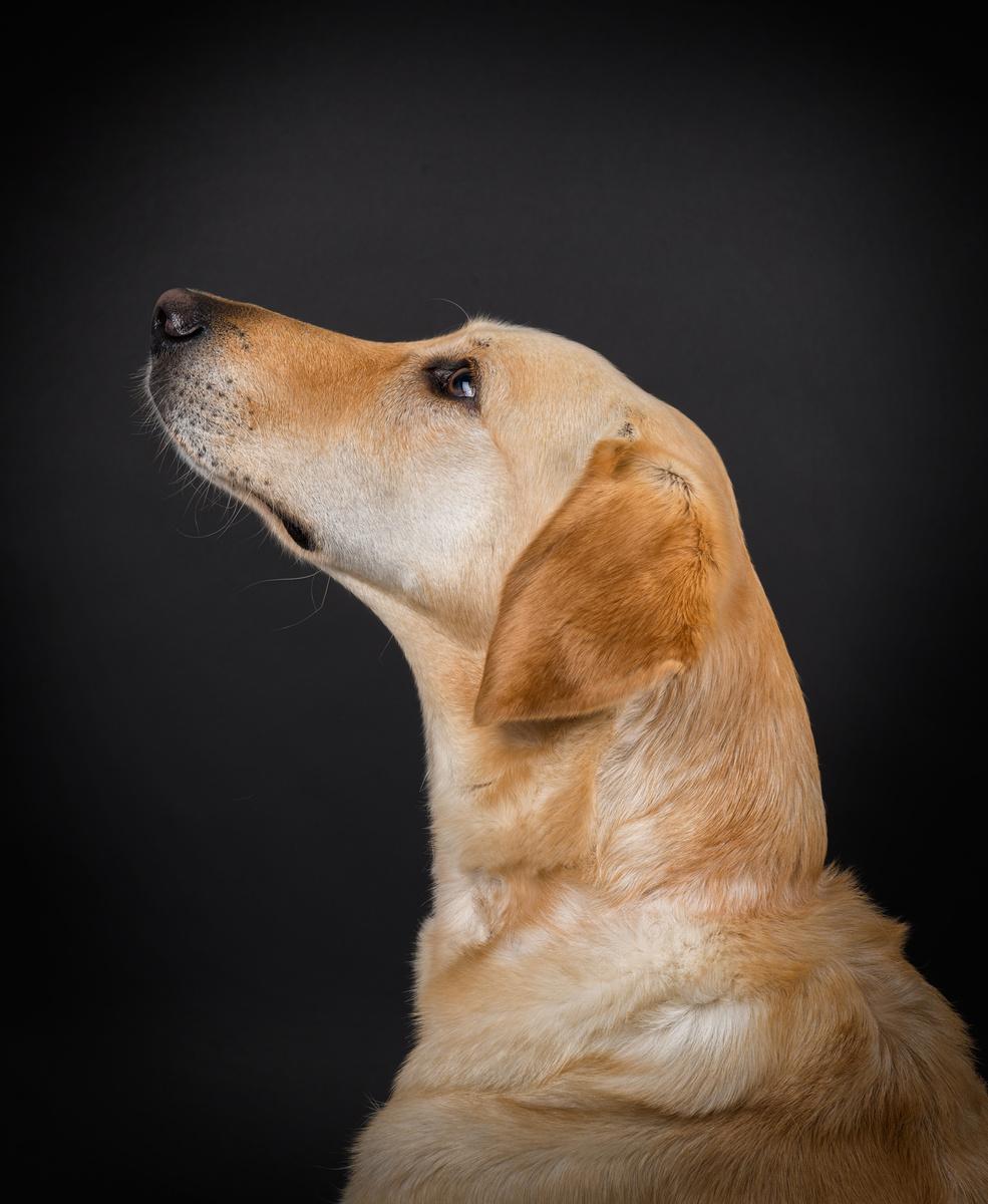 Stevie - Studio Pet Portraits