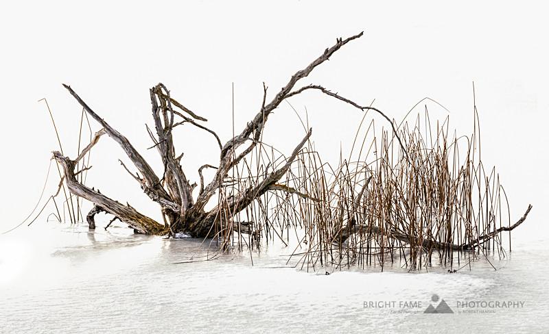 - Seasons On The Pond