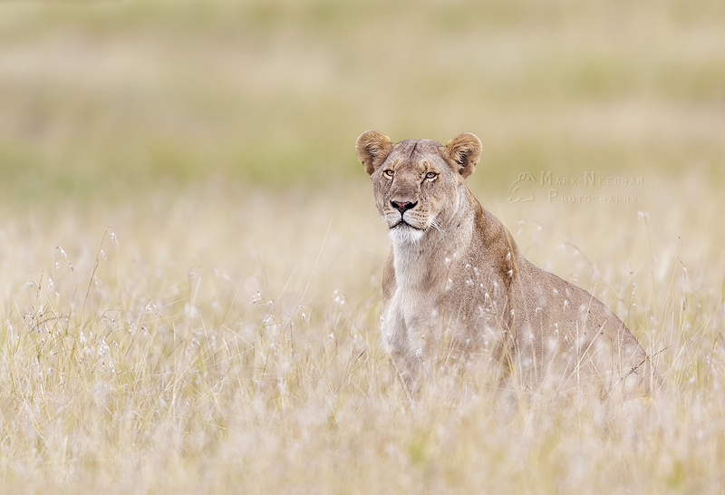 The Queen's Stare - Prowling Predators