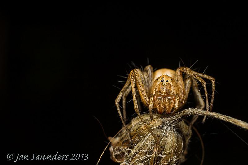 Itsy bitsy spider - Makro