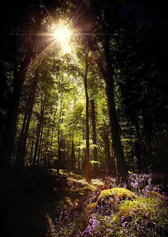 Enchanted Forest - Irish Landscapes