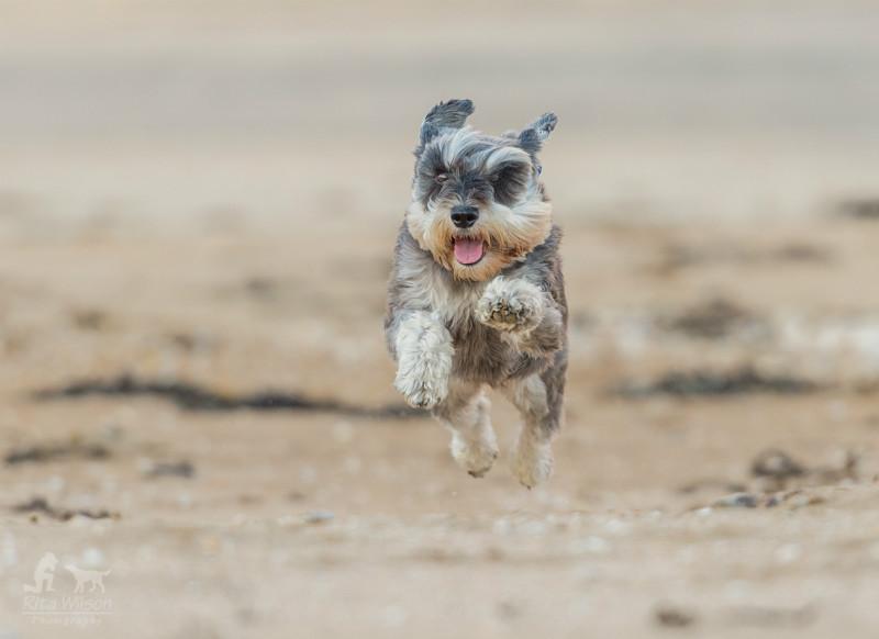 Fly Winston - Pet Photography