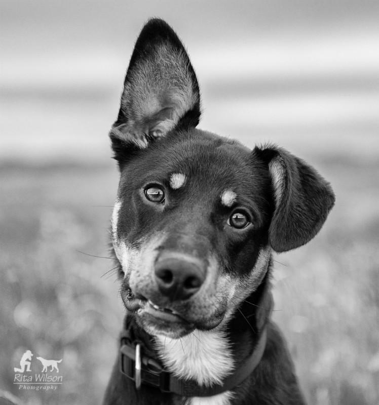 Buddy - Pet Photography