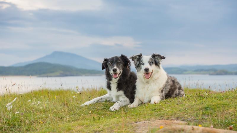 Ben & Kyle - Pet Photography