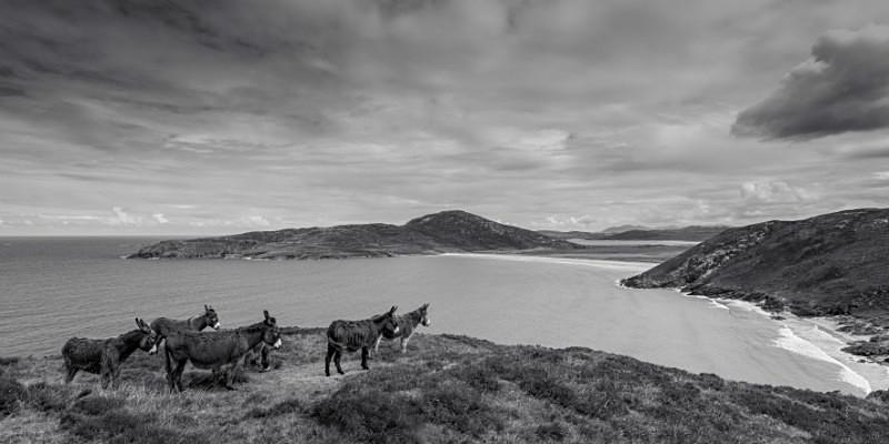 Donkeys at Tra na Rossan Bay - Black & White