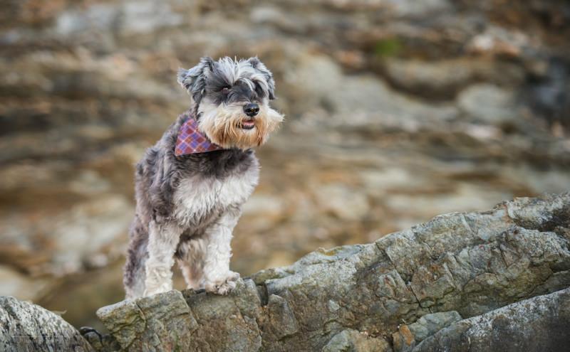 Winston - Pet Photography
