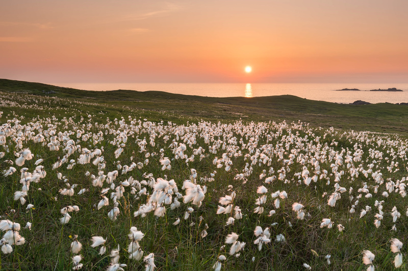 Field of Cotton Dooey - Co. Donegal