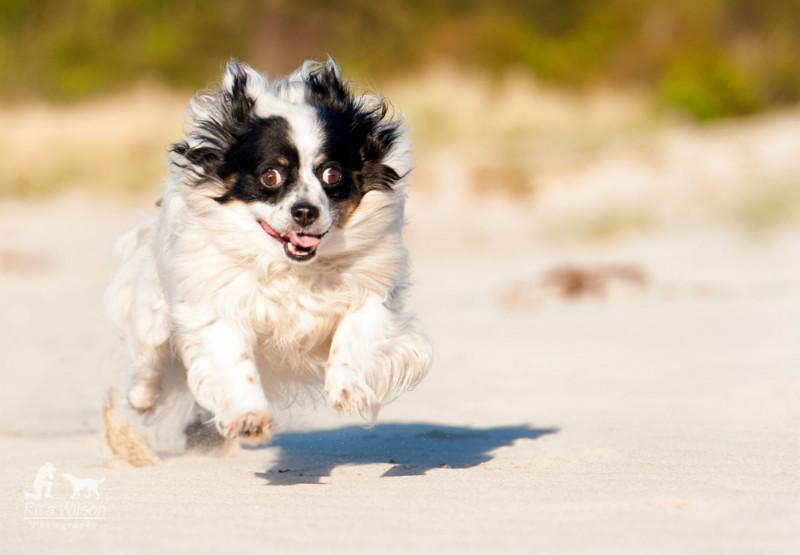 Go Lucky - Pet Photography