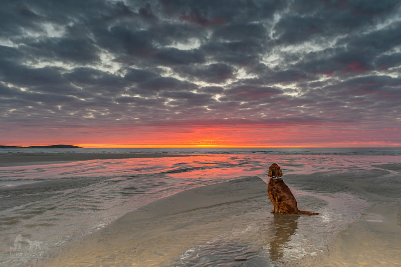 Irish Setter, Ballyhiernan Beach, Fanad. - Pet Photography