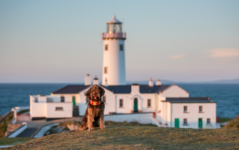 Guardian of the Lighthouse - Pet Photography