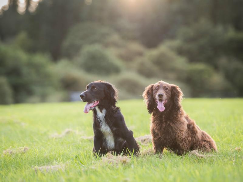 Monty & Buffy - Pet Photography