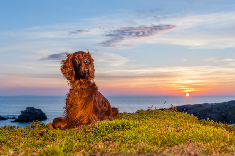 Ole Sunset - Pet Photography