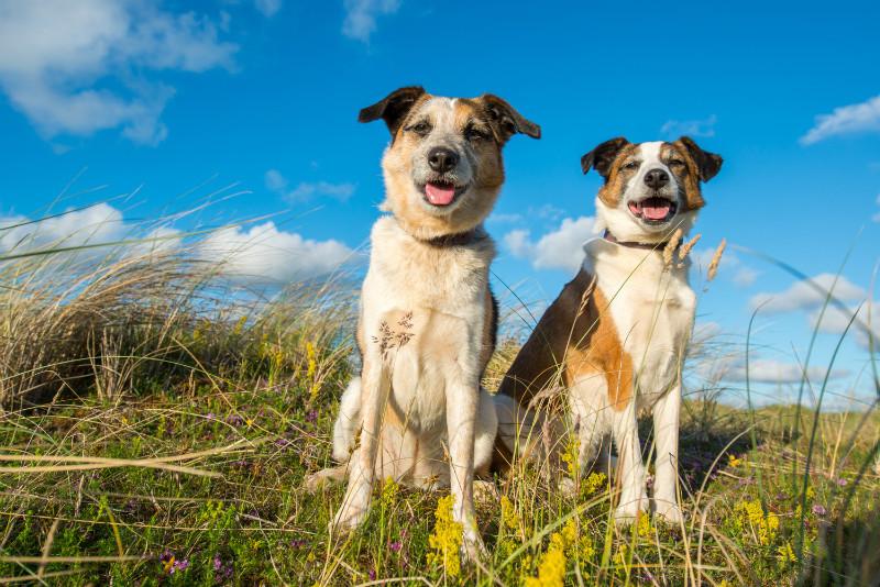 Tillie & Jack - Pet Photography