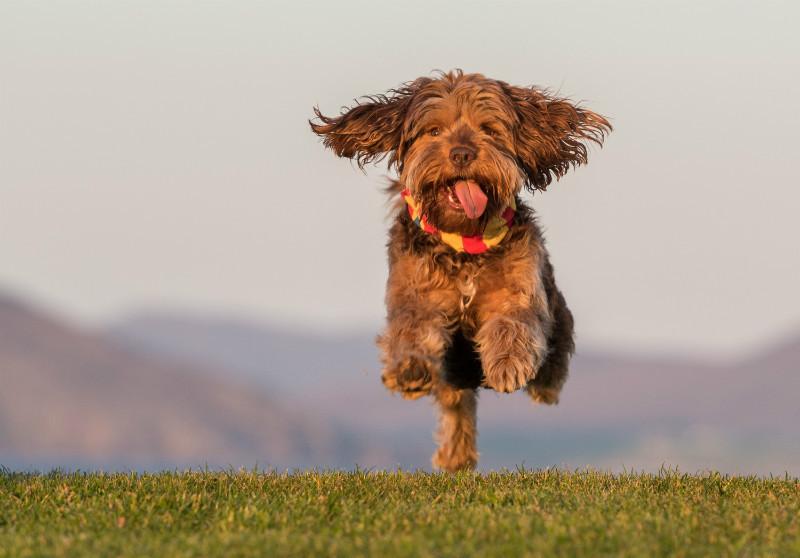 Sam Flying - Pet Photography