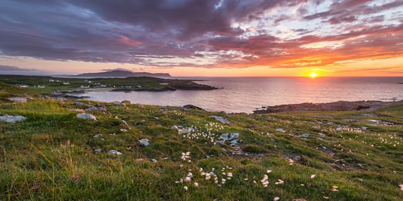 Dooey - Irish Wildflower - Co. Donegal