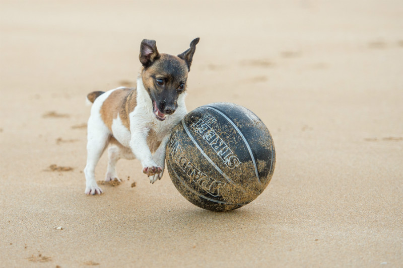 Ball Skills - Pet Photography
