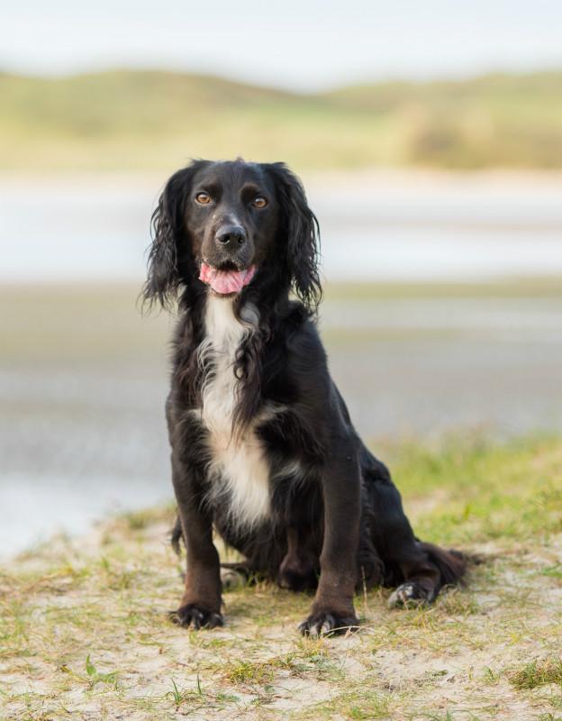 Monty - Pet Photography
