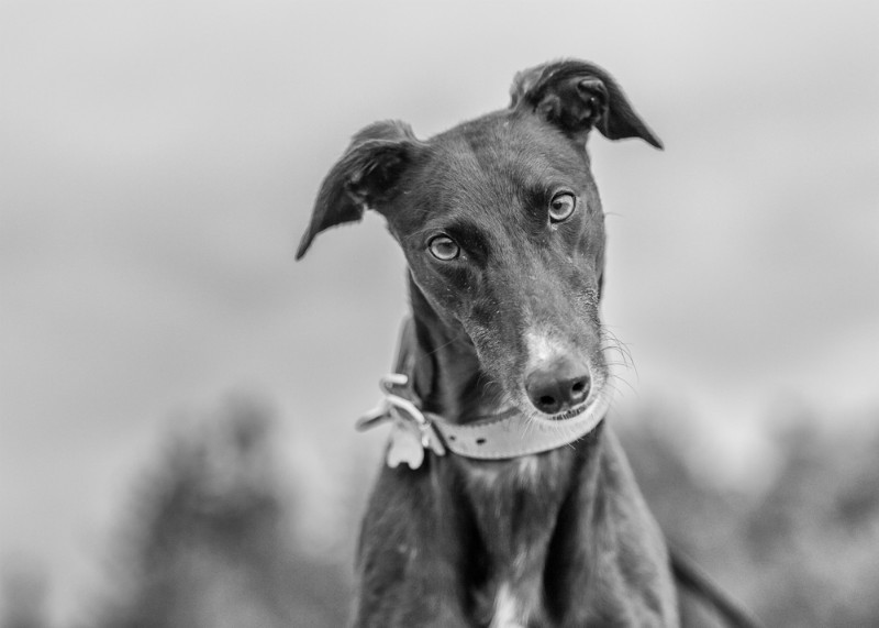 What - Pet Photography