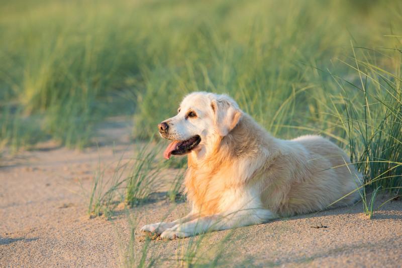 Murphy - Pet Photography