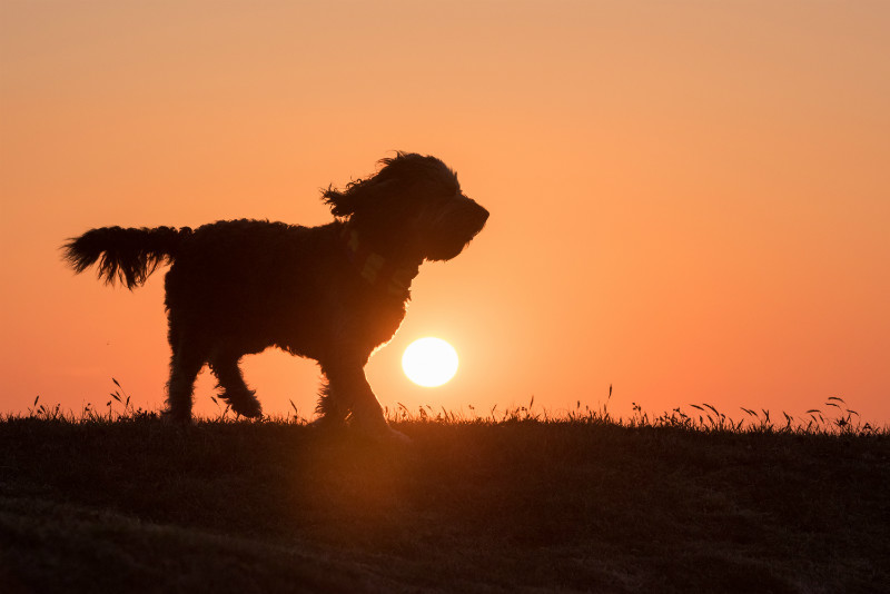 Into The Setting Sun - Pet Photography