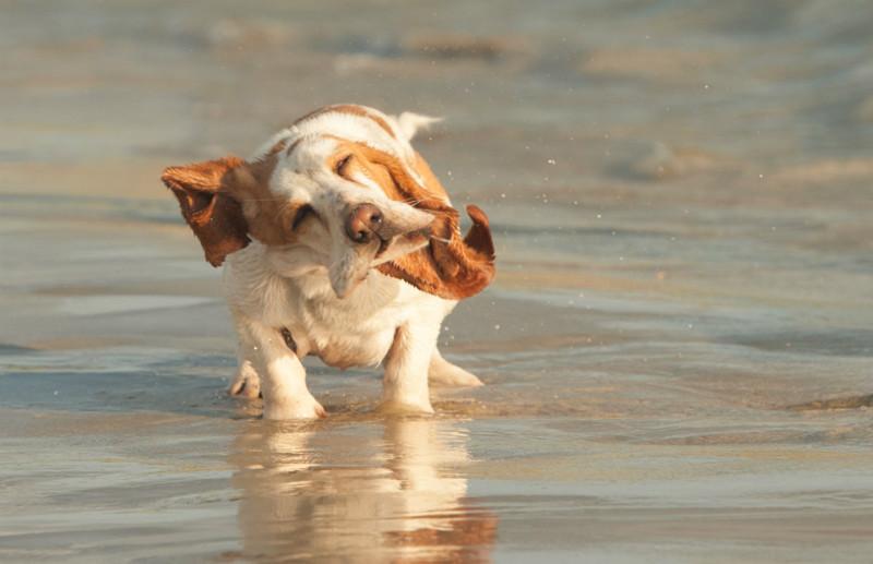 Shake it Dot - Pet Photography