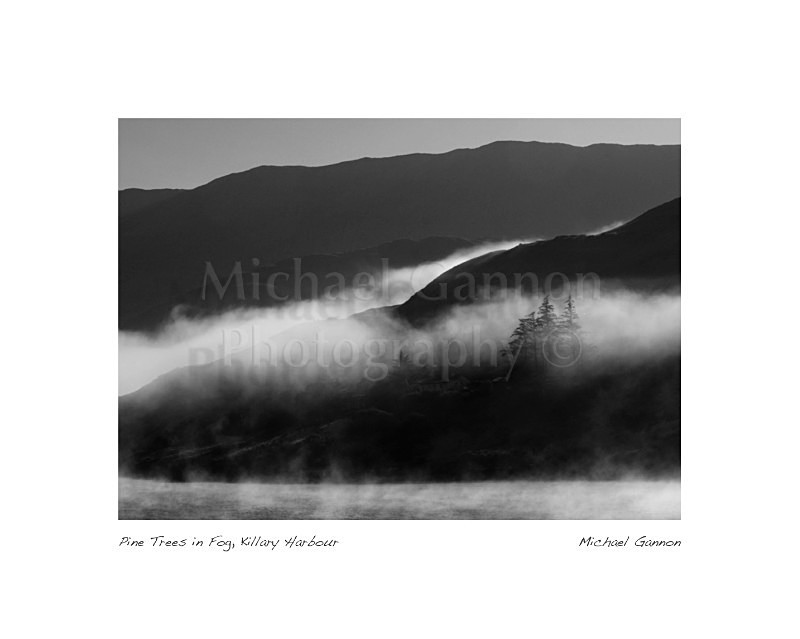 Pine Trees in Fog Killary Harbour 1 - Landscape Black and White