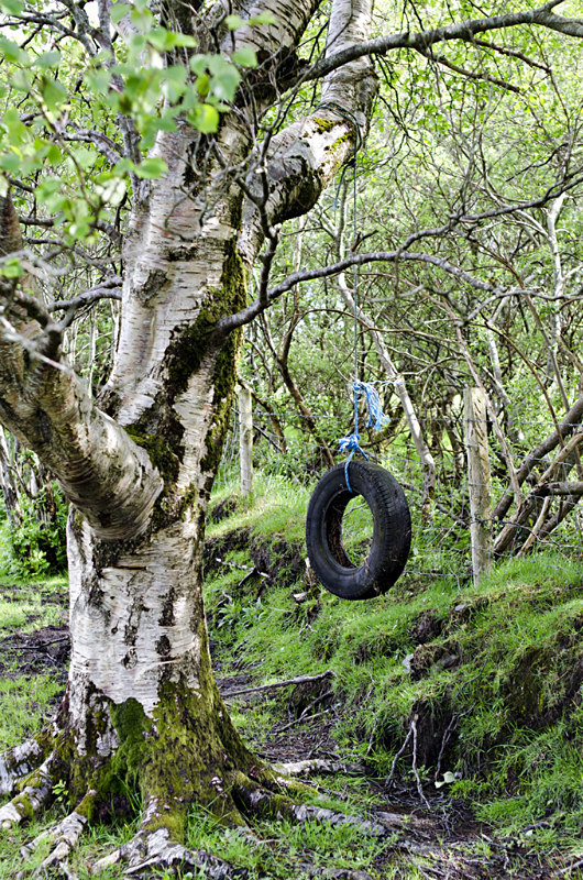 4 - Tyre Swings