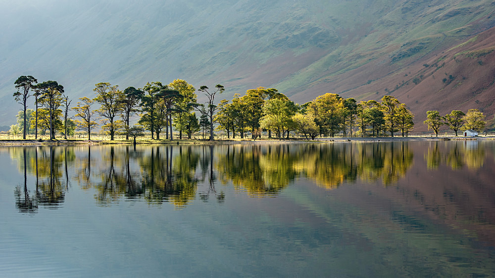 The Pines in Lights - The Lake District