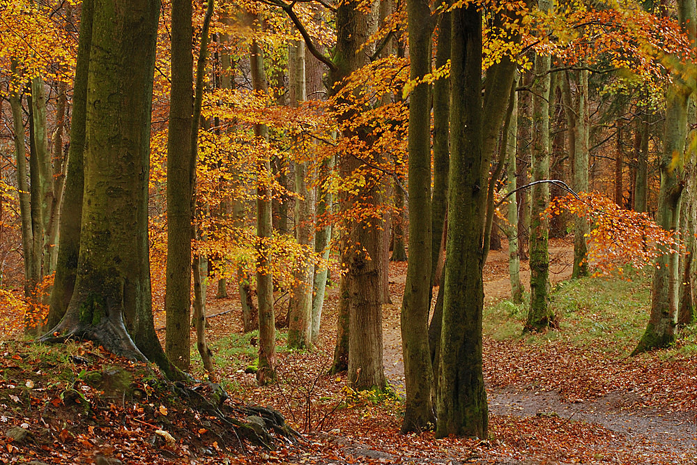 Strid Wood - The Seasons