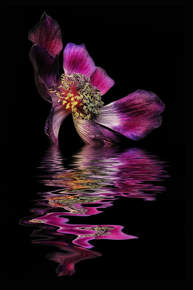 Deep Purple - Flooded Flowers
