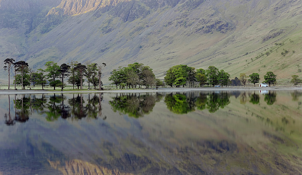 Buttermere Pines - The Lake District