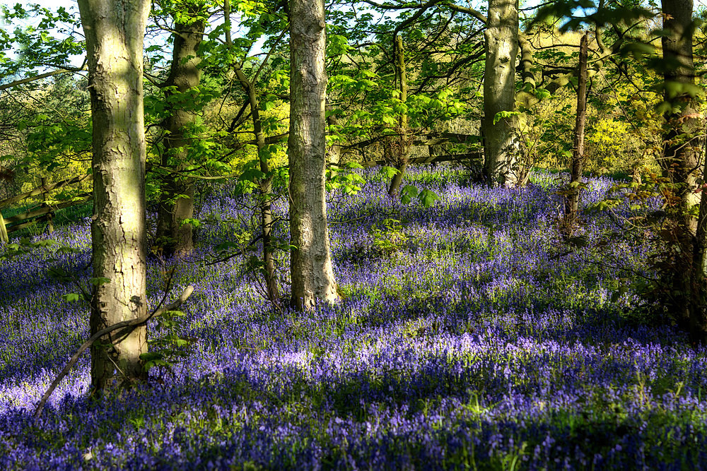 Bluebells and Light - The Seasons